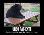 patient_bear